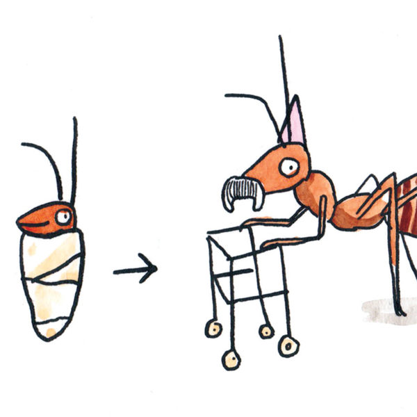 Preview of full image. Baby ant wrapped in blacket with arrow pointing to older ant with zimmer frame, moustache and purple party hat.