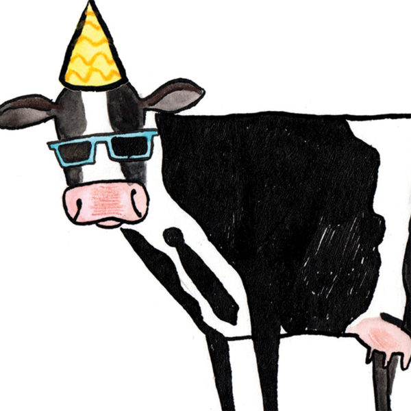 Close up of a black and white cow whose markings look like a tuxedo! The cow has a spodge the shape of a tie, is wearing sun glasses and has a yellow party hat on