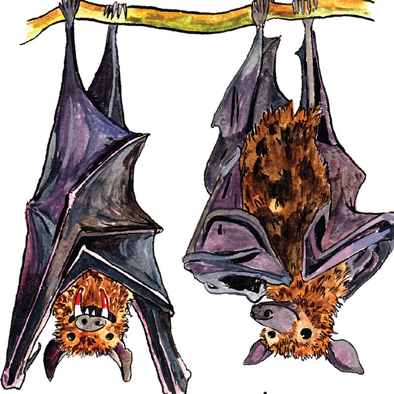 Bloody-Brilliant_Funny-bat-greetings-card-with-British-humour_IT16_CU