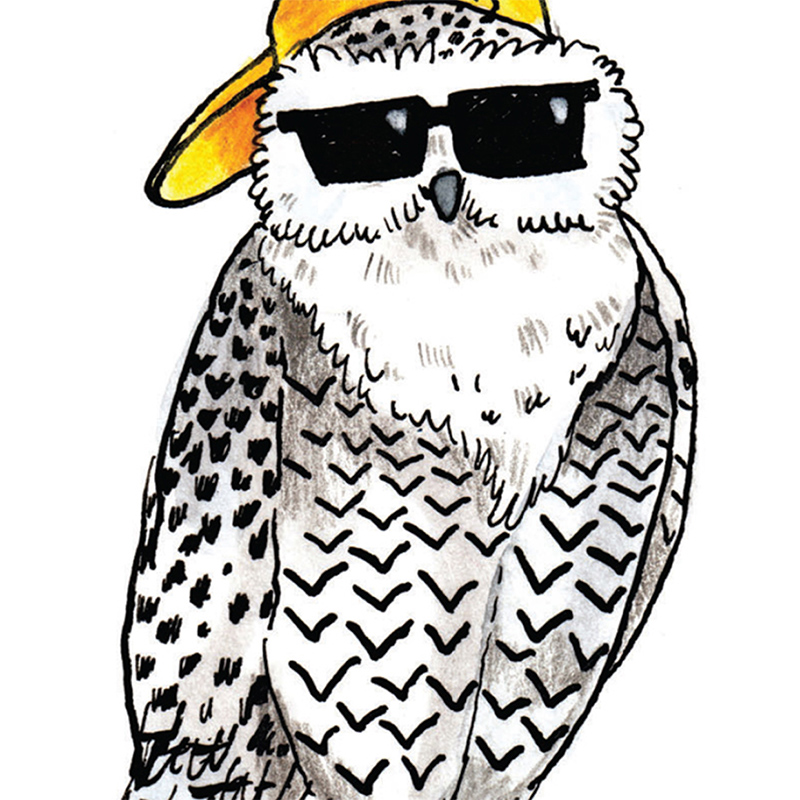 Hootally-Owlsome_-Congradulations-greetings-card-for-new-jobs-graduations-and-all-celebrations_SO48_CU