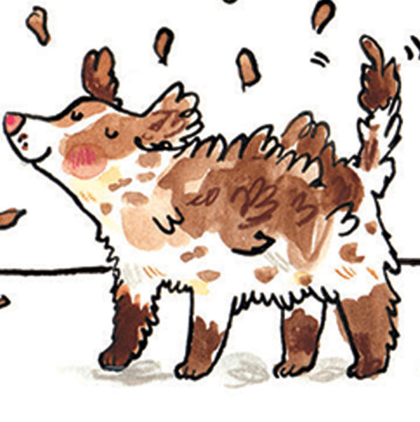 A close up of a brown and white dog covered in mud. It is shaking itself to get the mud out of its fur.